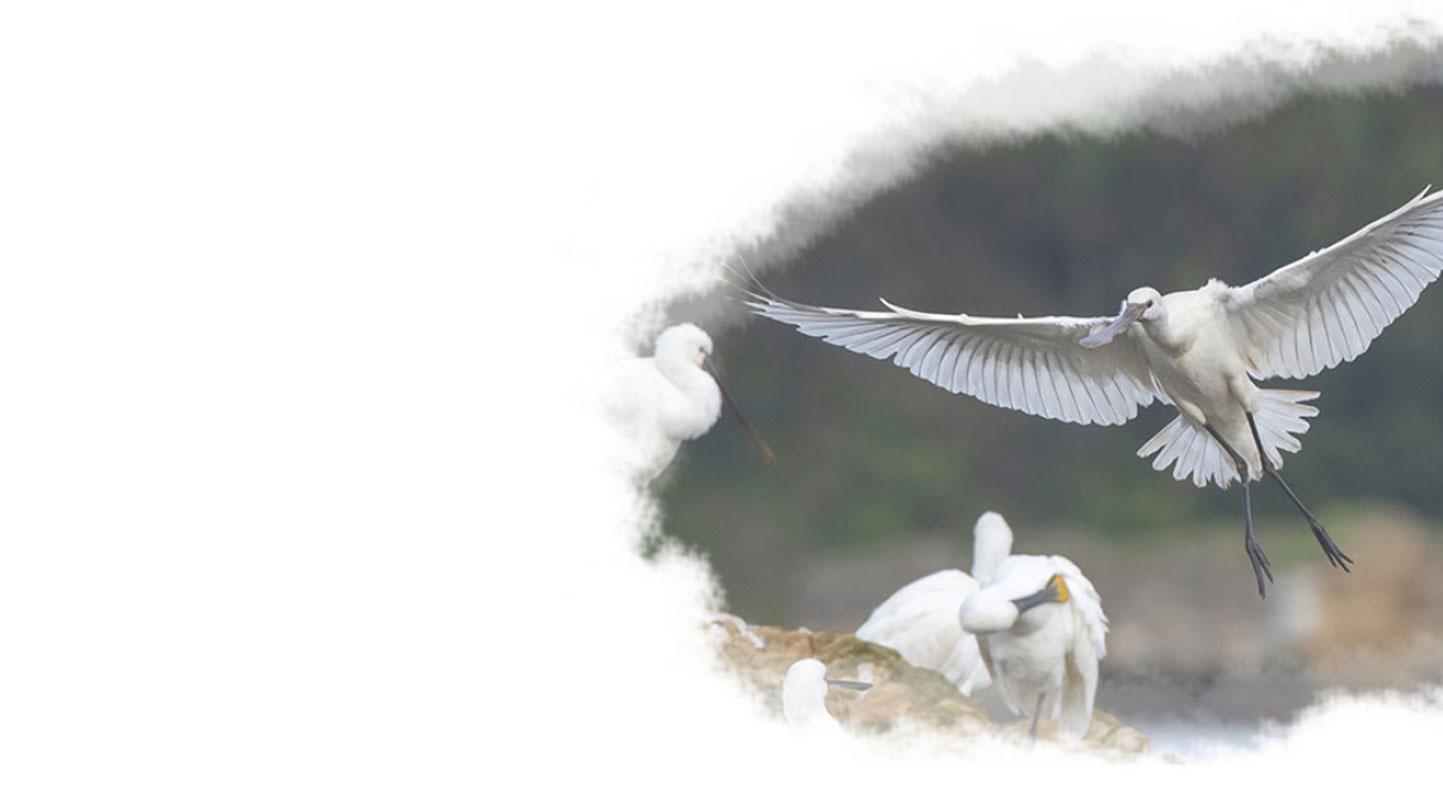 imagen de pájaros